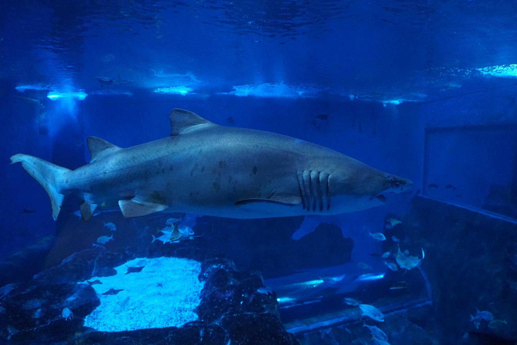 Opini n de acuario de sevilla fascinante interesante - Entradas acuario sevilla ...