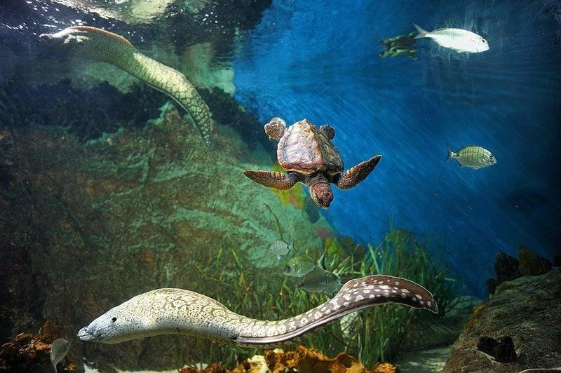 Acuario de almu car opiniones info precios ofertas for Precio entrada aquarium