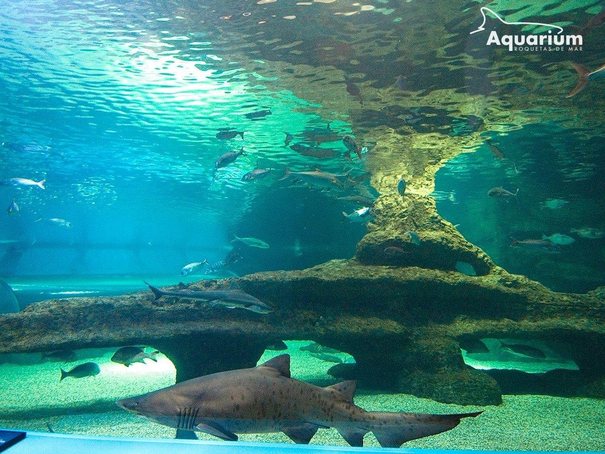 Aquarium roquetas del mar opiniones info precios for Precio entrada aquarium