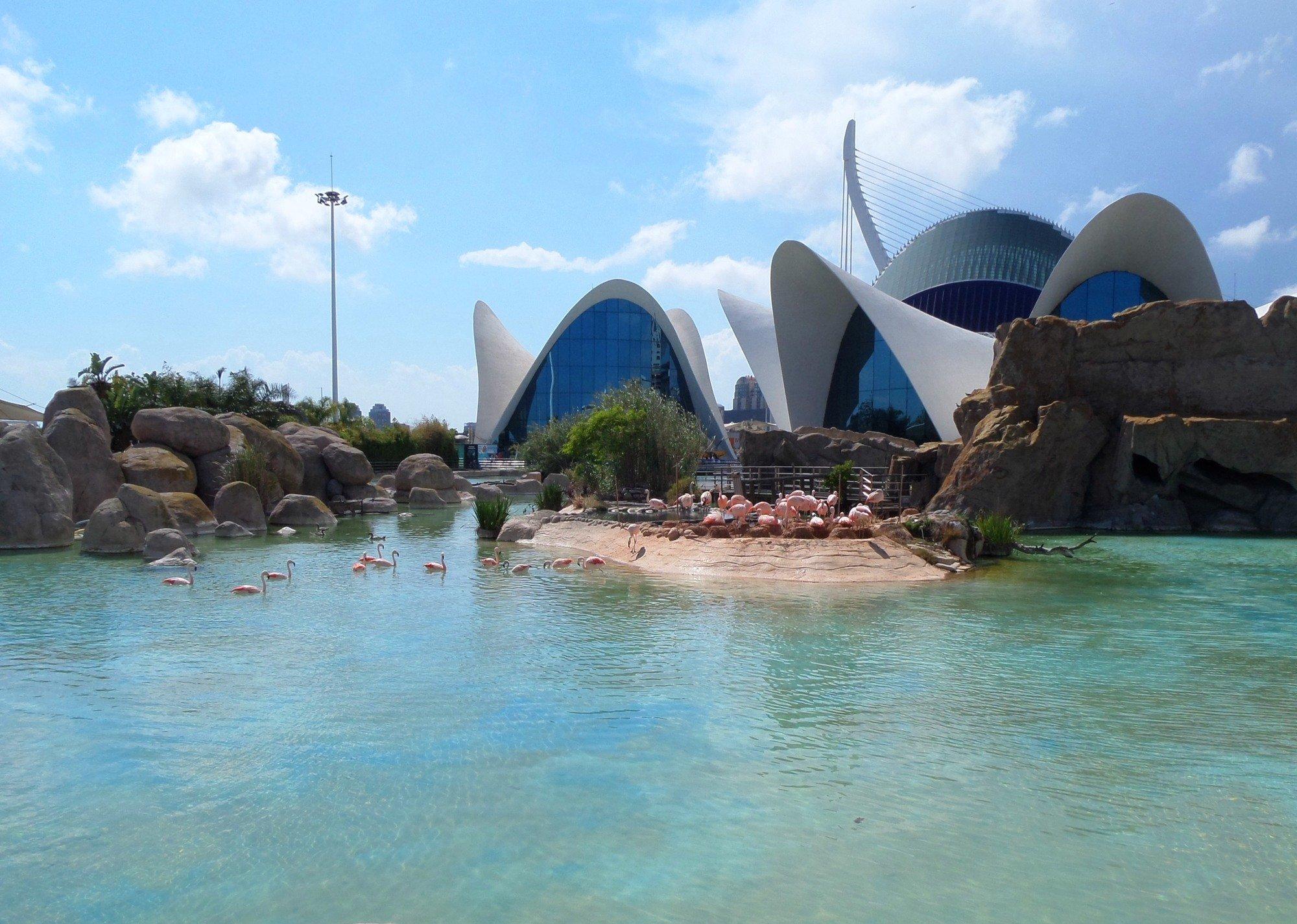 Oceanografic opiniones info precios ofertas pacommunity for Aquarium valencia precio