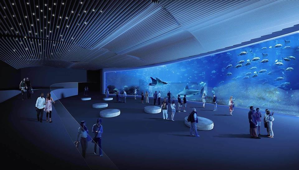 Acuario poema del mar opiniones info precios ofertas for Precio entrada aquarium