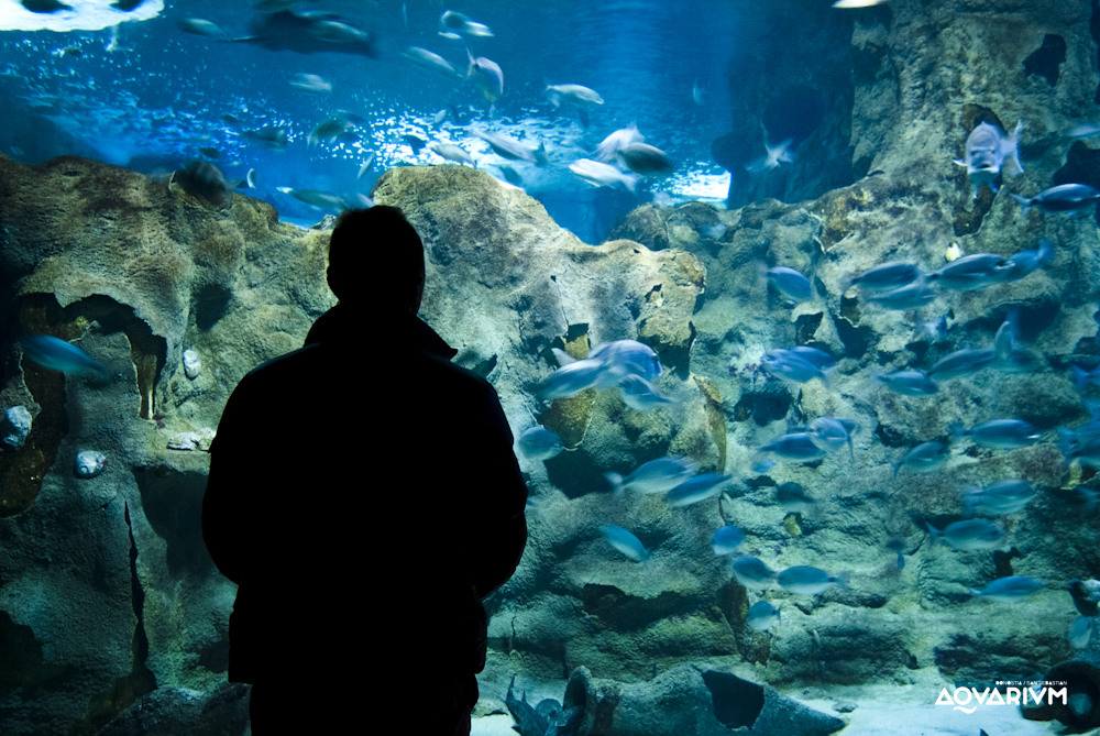Aquarium donostia opiniones info precios ofertas - Aquarium donosti precio ...