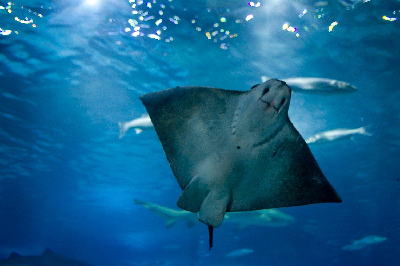 Opini n de aquarium de barcelona peces en barcelona for Precio entrada aquarium