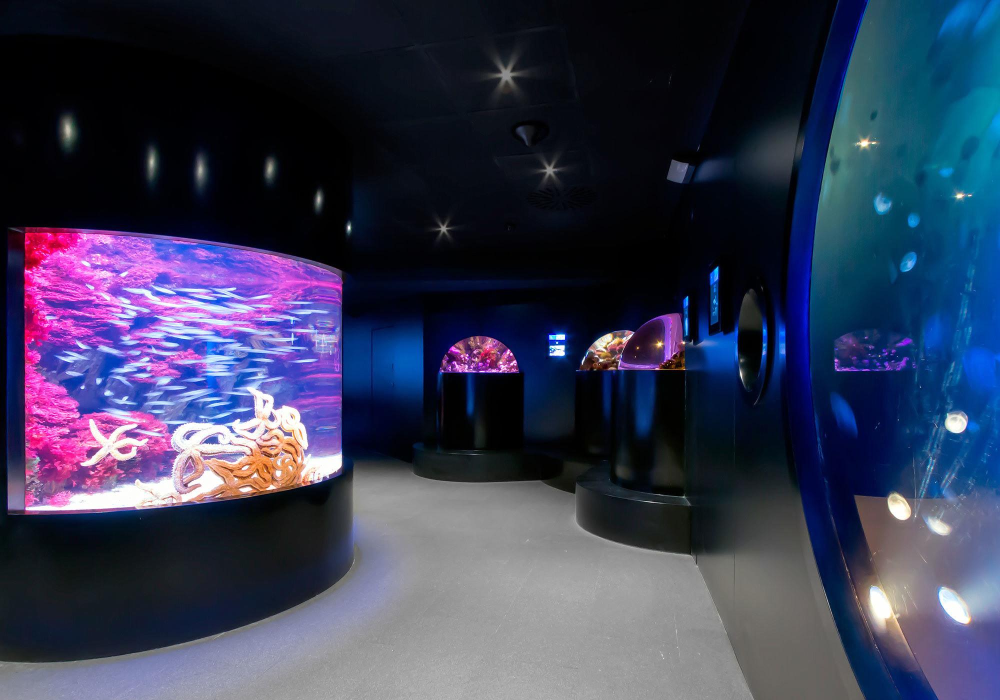 Aquarium donostia opiniones info precios ofertas for Precio entrada aquarium
