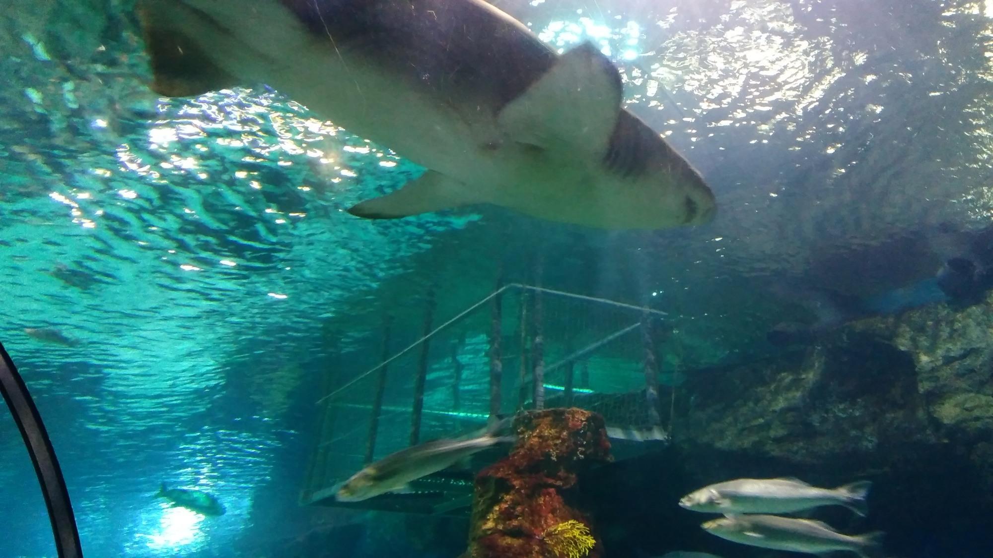 Aquarium de barcelona opiniones info precios ofertas for Precio entrada aquarium