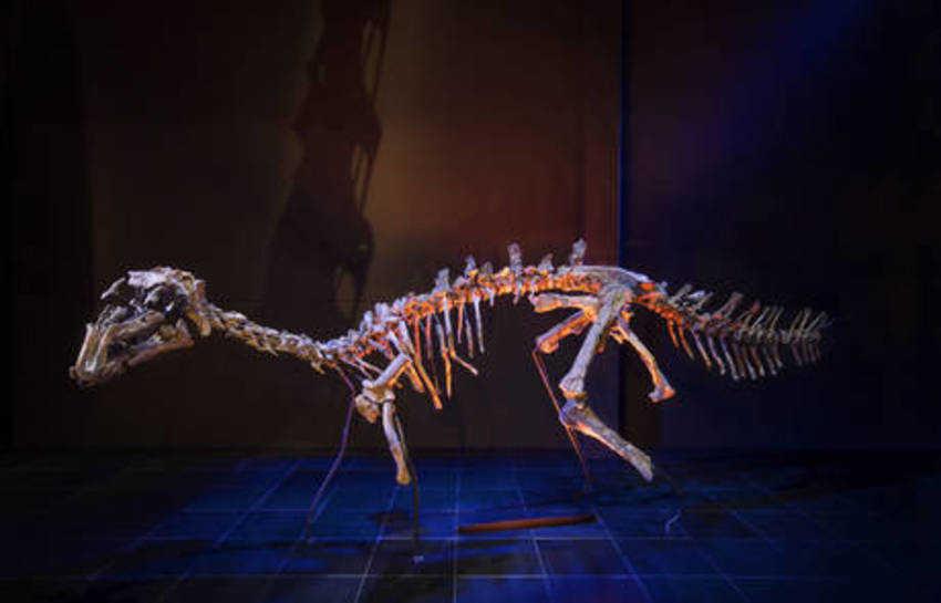 'Proa valdearinnoensis', un inusual iguanodontio con más de 100 millones de años.