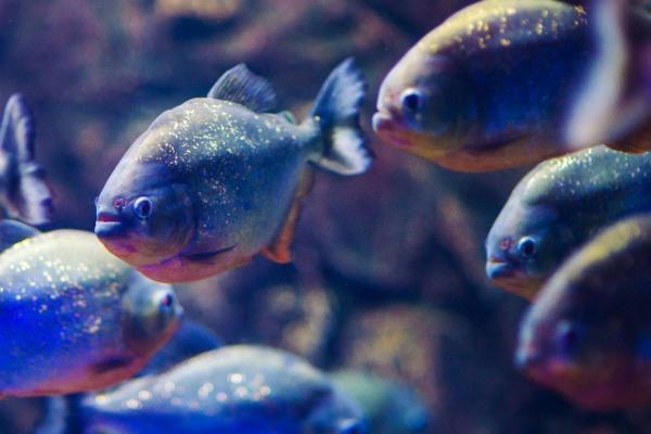 Atlantis Aquarium Madrid