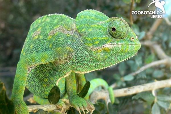 Zoobotánico de Jerez