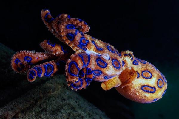 Aquarium Roquetas del Mar